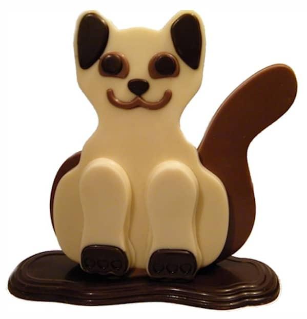 chocolade-kat in wit
