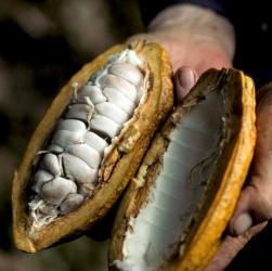 chocolade cacaobonen